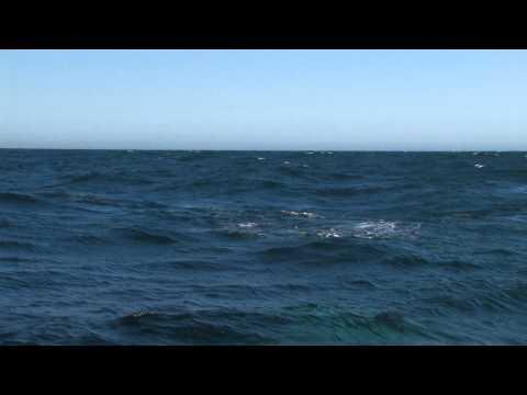 Whale Rainbow