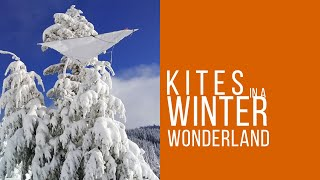 Kite flying in a winter wonderland - A Journey to fly kites everywhere