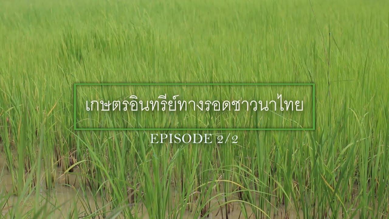 วีดีโอเรียนรู้การปฎิบัติการในแปลงเกษตรอินทรีย์โดย ดร.รณวริทธิ์ ปริยฉัตรตระกูล