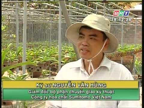 Kỹ thuật phòng trừ bệnh thối nhũn hại cây phong lan