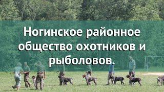 Охота в Московской области – Ногинское районное общество охотников и рыболовов. охота на рябчика