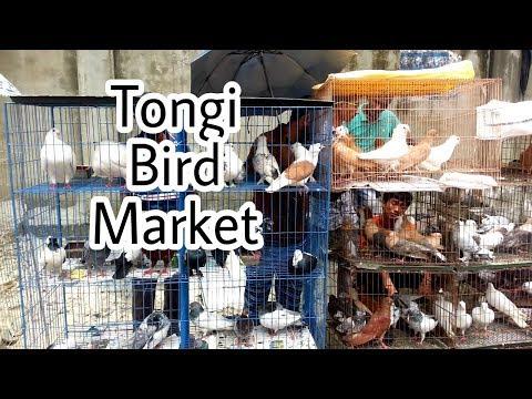 Tongi Bird Market || Biggest Bird Market Visit || Part - 1 ||