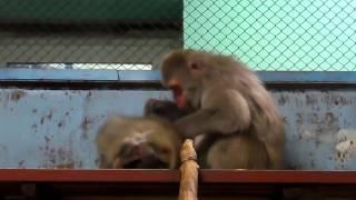 ЗАБОТЛИВЫЙ МУЖ делает массаж жене  Приколы с животными