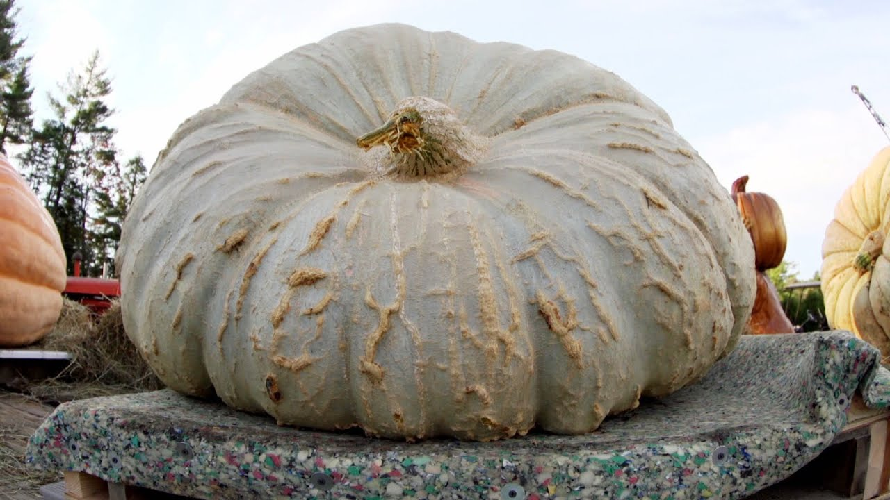 World's Largest Chunk? | Punkin Chunkin: SuperChunk!