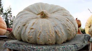World's Largest Chunk? | Punkin Chunkin: SuperChunk!