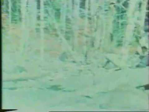 The Patterson-Gimlin Bigfoot film