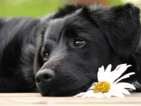 p tula clark le petit chien noir melodylovely1. Black Bedroom Furniture Sets. Home Design Ideas