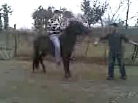 ცხენის გახედნა