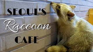Raccoon Cafe in Seoul, Korea - 너구리 카페 (Blind Alley Cafe)