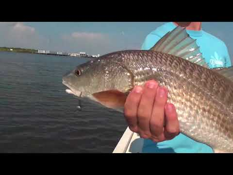 Productive Techniques For Louisiana Redfish