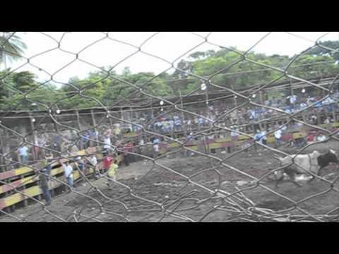Bull sport i Nicaragua.mov