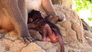 OMG! Why Diamond Doing Like This On Her Newborn Baby!