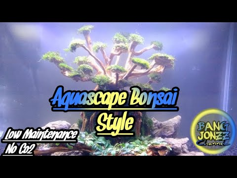 aquascape-bonsai-style|-aquascaping-step-by-step|-vlog#53