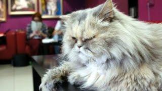 Музей кошки. История блокадного кота