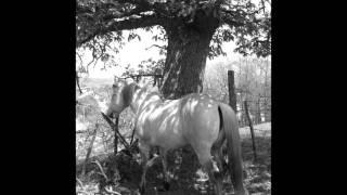 Au pas au trot au galop chevaux