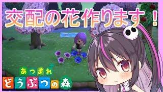 【あつまれどうぶつの森】島評価☆3にします!!交配花作ります!!