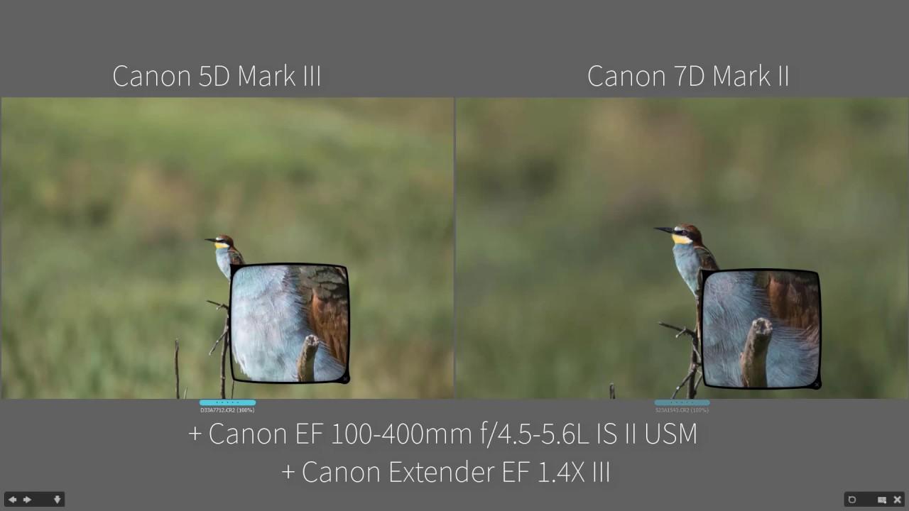 Full Frame vs Crop Sensor - Wildlife Photography - YouTube