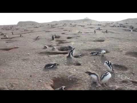 Paseo a Isla Magdalena, Región de Magallanes y de la Antártica Chilena