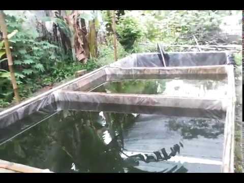 ukuran-ideal-kolam-pembesaran-ikan-lele-agar-cepat-besar-dan-cepat-panen