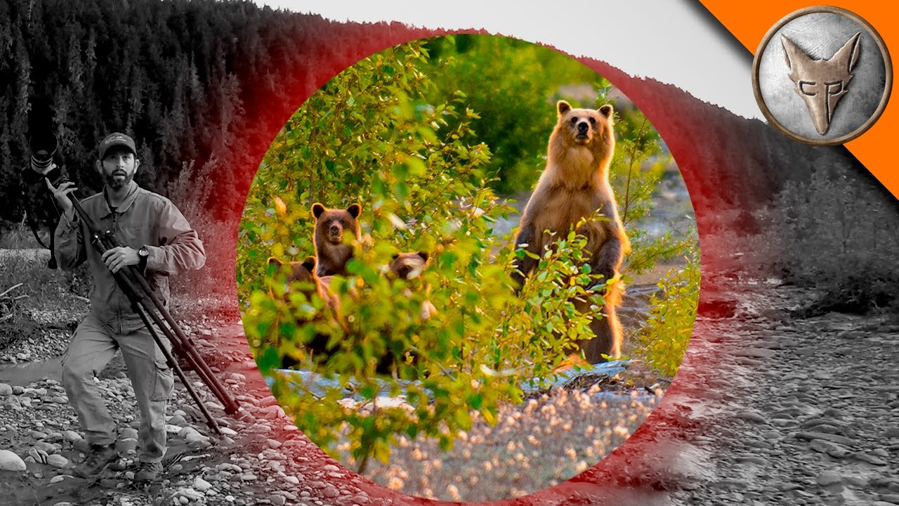 BEAR SCARE! – Grizzly with Cubs