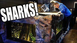 I GOT SHARKS!! Secret fish for 2,000G aquarium  - The king of DIY