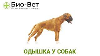 Одышка у собак. Ветеринарная клиника Био-Вет.