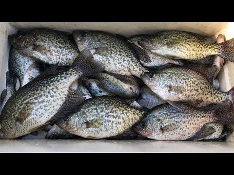 crappie-fishing-for-slabs!-missed-a-giant!-it's-been-a-while-but-we-are-back!!!