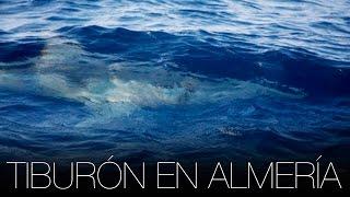 Tiburón blanco en Andalucía - Cabo de Gata (Almería)   Tiburones en España