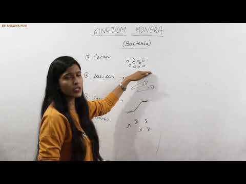 Kingdom monera, Biology class 11, NEET, AIIMS. by Maharaj institute nstitut