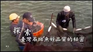 石來運轉 臺灣大宗國產養殖魚種影片 石斑魚篇 國語7分鐘