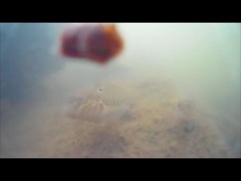 Underwater episode 13: Illinois River/Round Gobies (site #12