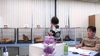 東京都でメインクーンのブリードをしています。子猫を飼いたい方の、ご...