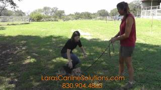 Introducing A Shy Dog To Strangers - San Antonio Caninetraining Tips
