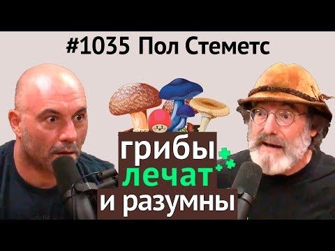 Джо Роган #1035 Пол Стеметс - о пользе грибов, мистических свойствах, разумности, кордицепсе и др.