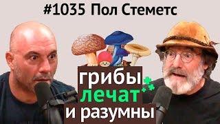 Джо Роган #1035 - Пол Стеметс о пользе грибов, мистических свойствах, разумности, кордицепсе и др.
