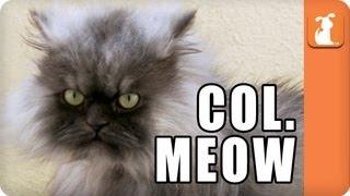 Colonel Meow - Meme'd