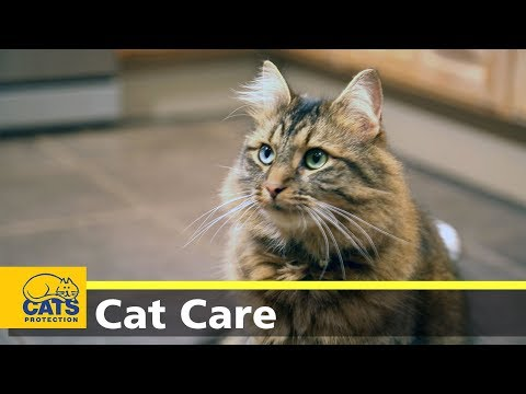 Cats And Toxoplasmosis - Cats Protection's Kids And Kitties