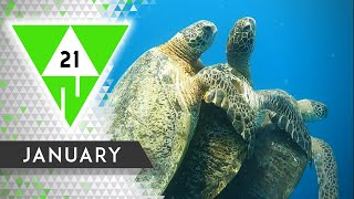 WIN Compilation JANUARY 2021 Edition | Best videos of the month December
