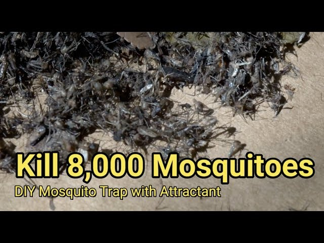 Man Kills Thousands Of Mosquitoes Every Night Using This Genius