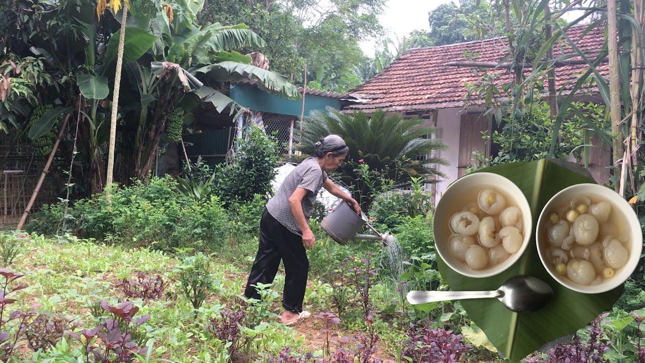 Mẹ nấu chè hạt sen long nhãn thơm ngon thanh mát cho ngày hè ( Cơm Mẹ Nấu)