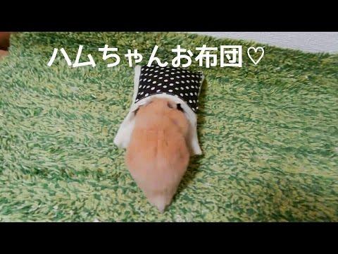 【笑える】ハムスターお布団の行く末!おもしろ可愛いハムスターcute humorous hamster Futon of a hamster