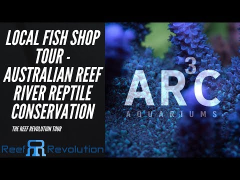 ARC Aquariums - Sydney LFS Tour