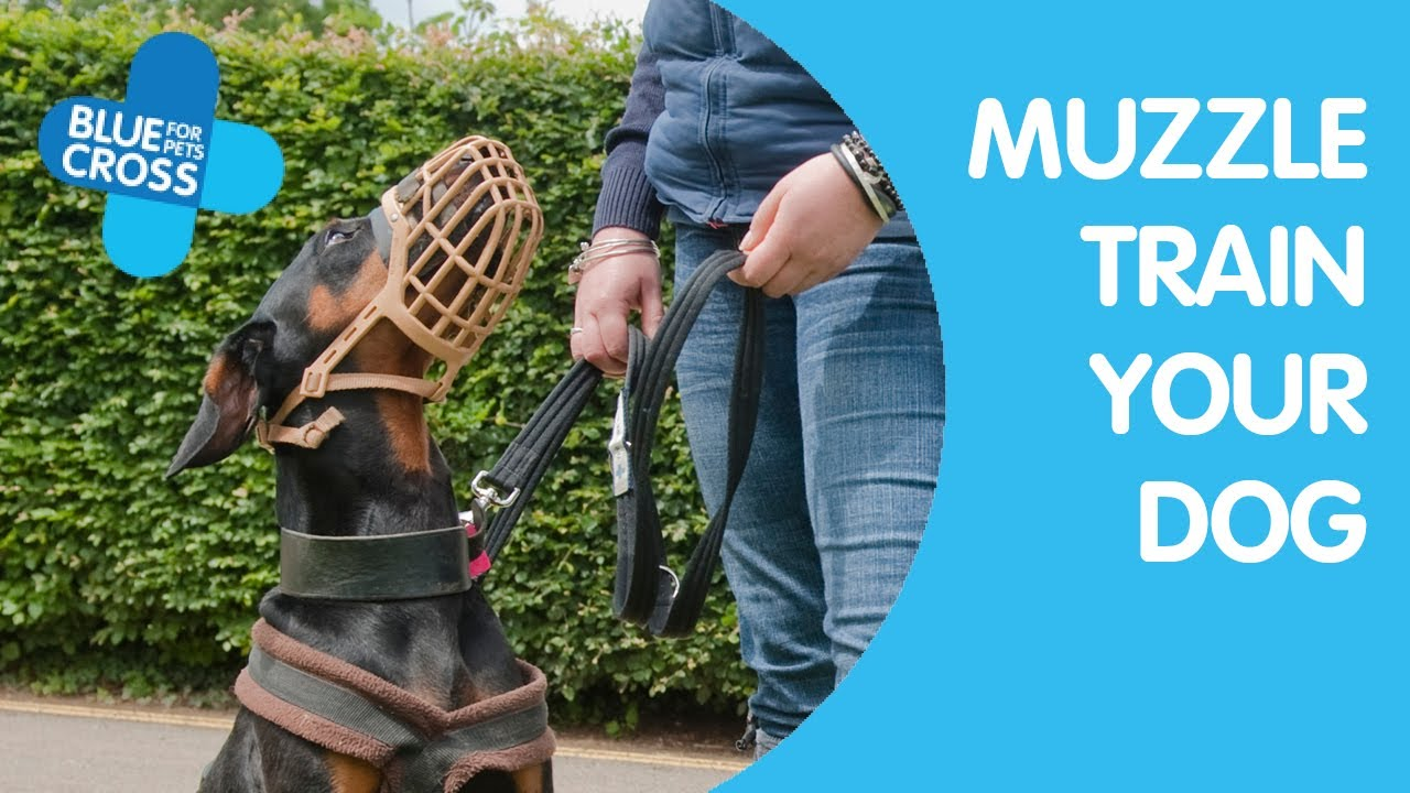 Controlling dog aggression by using a dog muzzle - K9aggression com