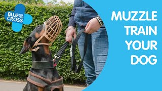 Blue Cross Training - Muzzle Training Your Dog