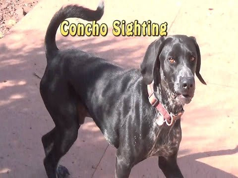 Video is About Concho the Homestead Dog.