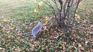 коты на природе