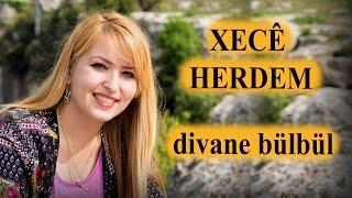 Xecê Herdem Divane Bülbül (Akustik)