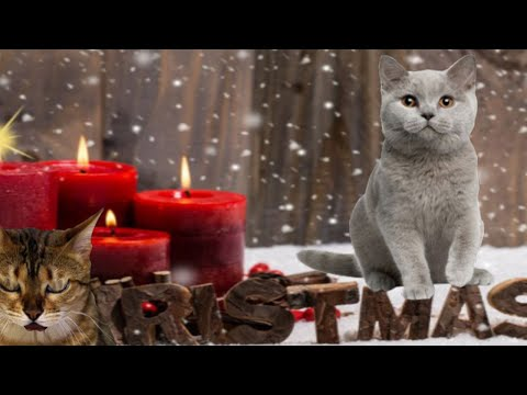 "Singing Cats - Cat sings ""We wish you a merry Christmas"" 