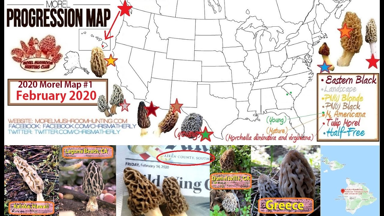 morel mushrooms iowa map The 2020 Morel Mushroom Season Has Now Started Youtube morel mushrooms iowa map