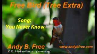 "Andy B. Free - You Never Know - Soft Rock Love Song - from the album ""Free Bird (Tree Extra)"""